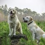 Helping your dog feel more comfortable around their own kind