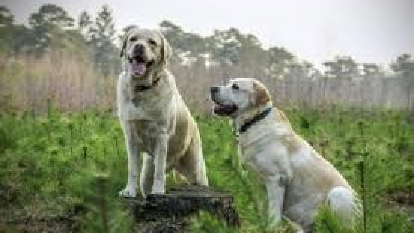 Helping your dog feel more comfortable around their own kind2