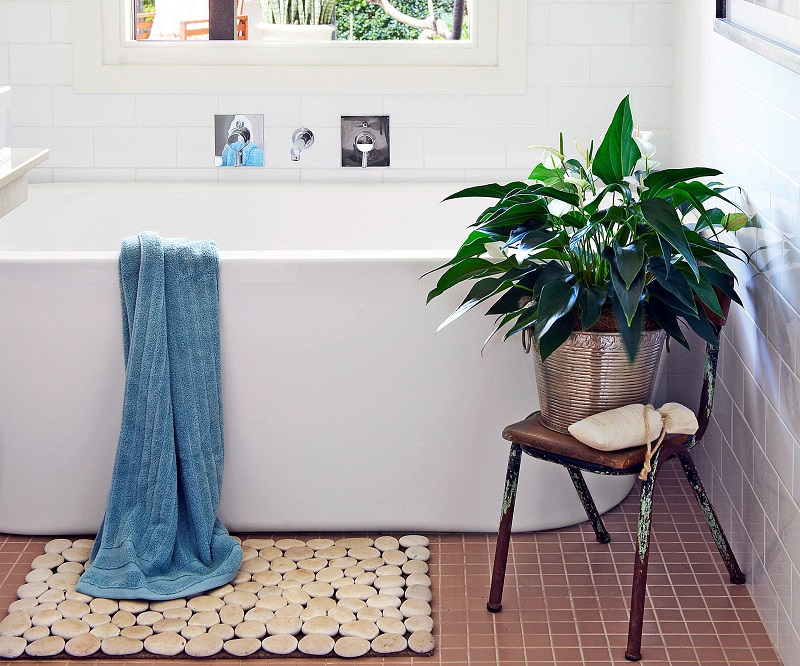 6 best plants for bathroom