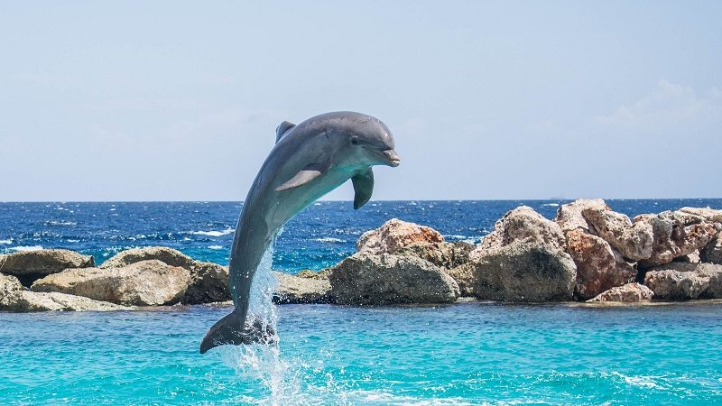 How Long Do Dolphins Live