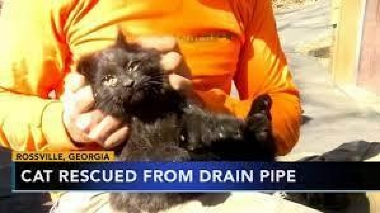 Creatures that are Often Found in the Drains2
