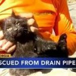 Creatures that are Often Found in the Drains
